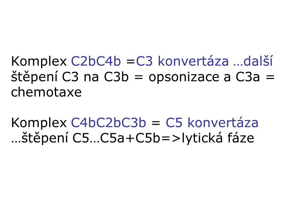 Komplex C2bC4b =C3 konvertáza …další štěpení C3 na C3b = opsonizace a C3a = chemotaxe