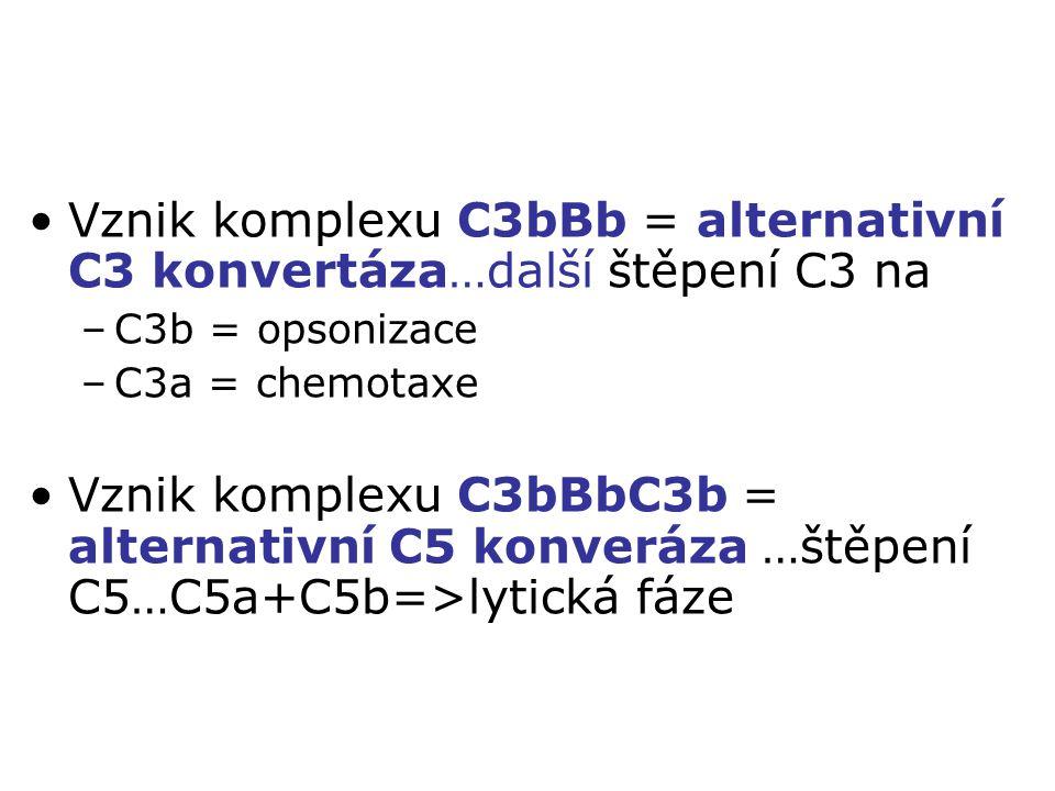 Vznik komplexu C3bBb = alternativní C3 konvertáza…další štěpení C3 na