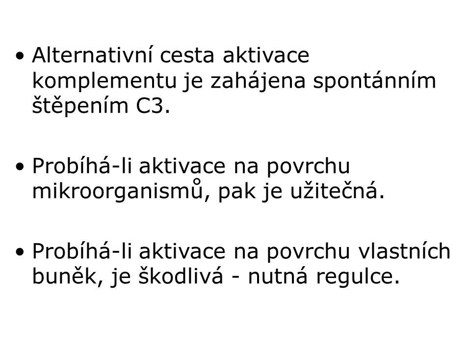 Alternativní cesta aktivace komplementu je zahájena spontánním štěpením C3.