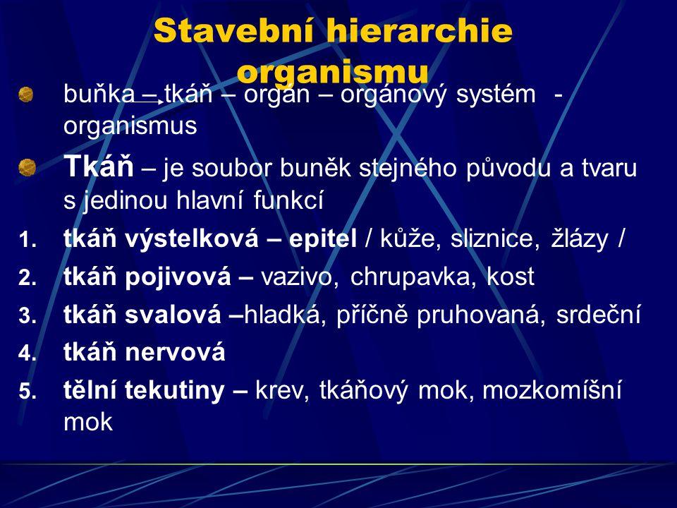 Stavební hierarchie organismu