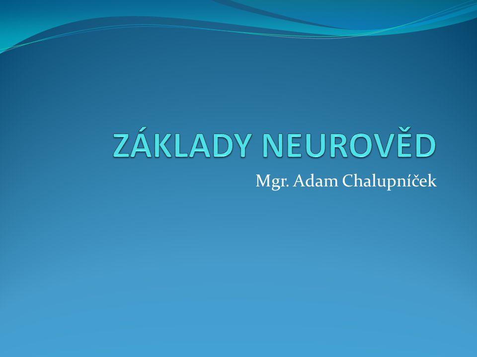 ZÁKLADY NEUROVĚD Mgr. Adam Chalupníček