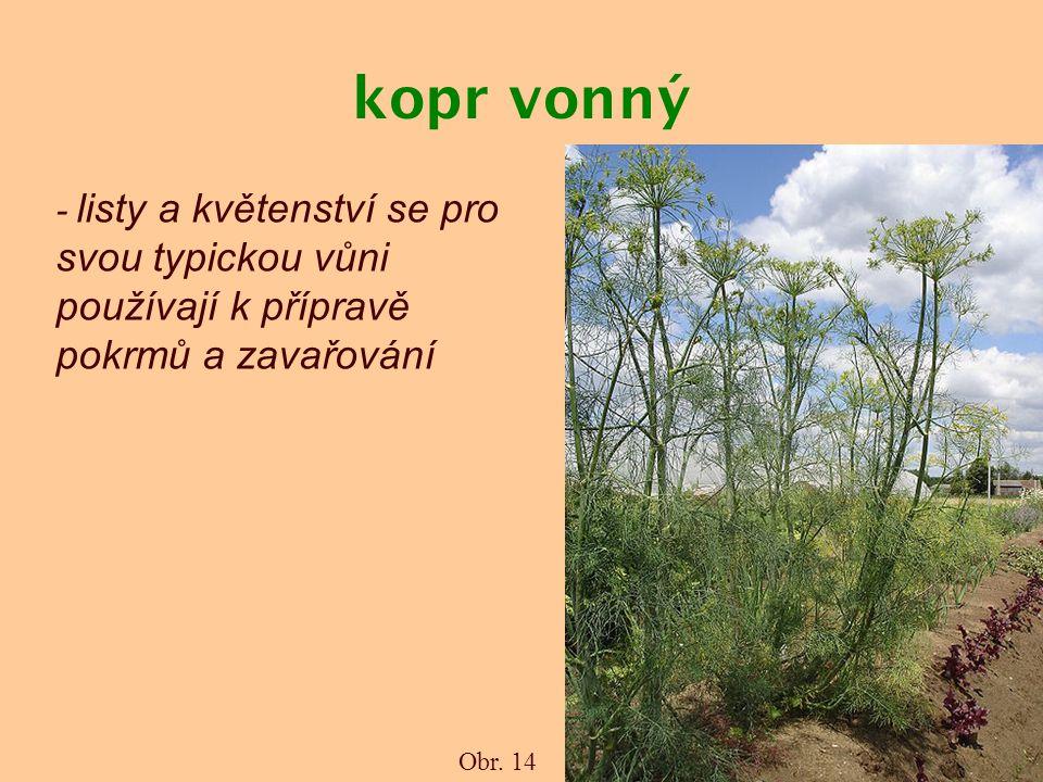 kopr vonný - listy a květenství se pro svou typickou vůni používají k přípravě pokrmů a zavařování.