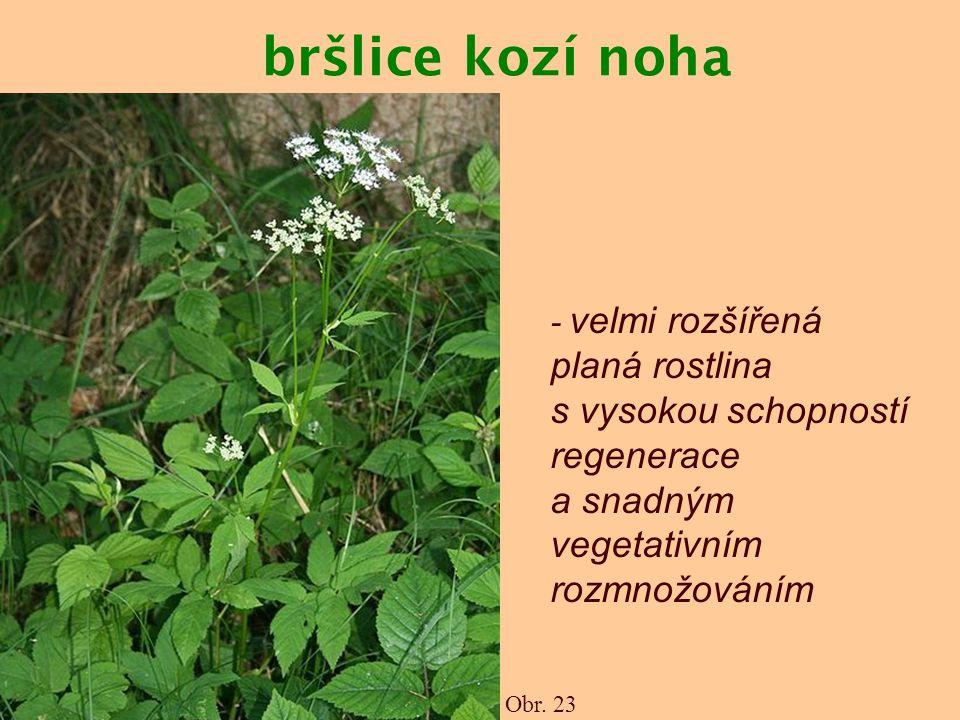bršlice kozí noha - velmi rozšířená planá rostlina s vysokou schopností regenerace a snadným vegetativním rozmnožováním.