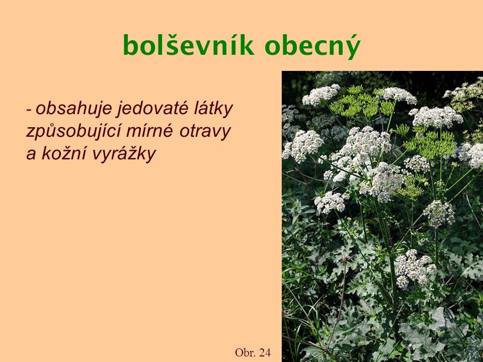 bolševník obecný - obsahuje jedovaté látky způsobující mírné otravy a kožní vyrážky Obr. 24