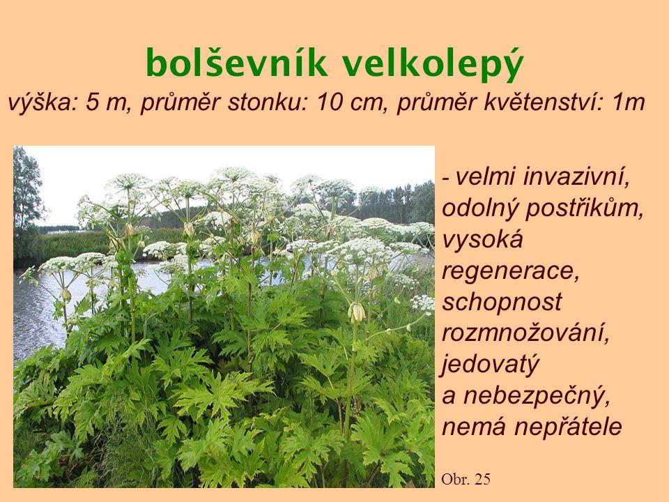 bolševník velkolepý výška: 5 m, průměr stonku: 10 cm, průměr květenství: 1m.