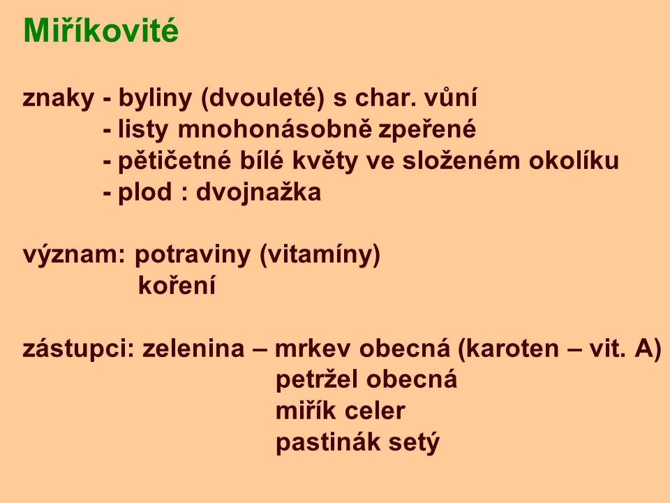 Miříkovité znaky - byliny (dvouleté) s char. vůní