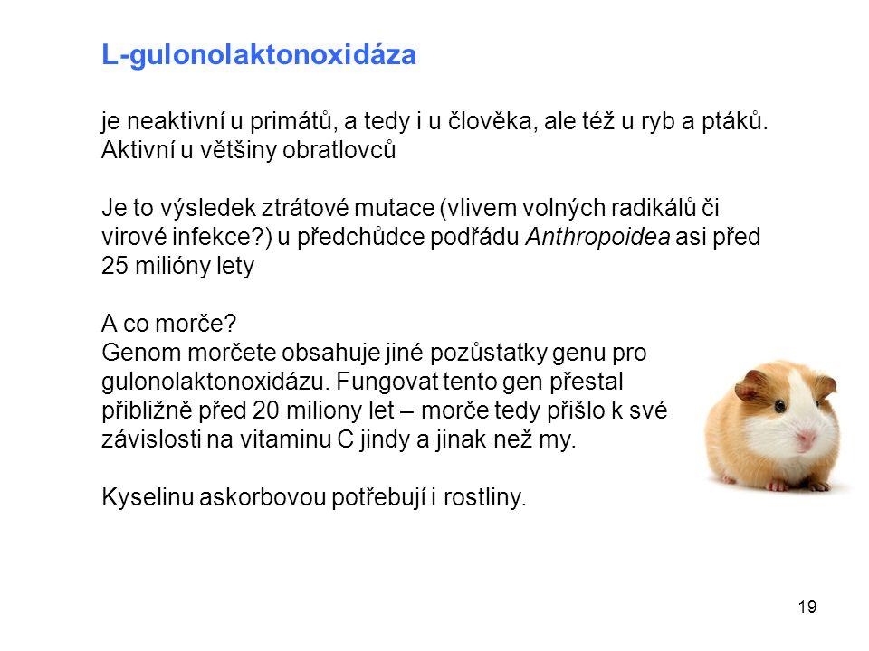 L-gulonolaktonoxidáza