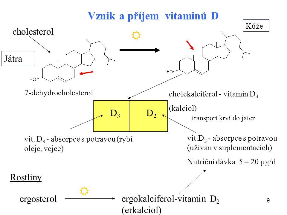   Vznik a příjem vitaminů D cholesterol Játra D3 D2 Rostliny