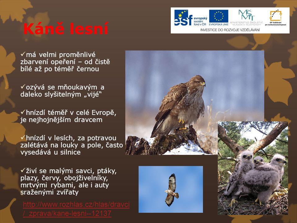 Káně lesní http://www.rozhlas.cz/hlas/dravci/_zprava/kane-lesni--12137