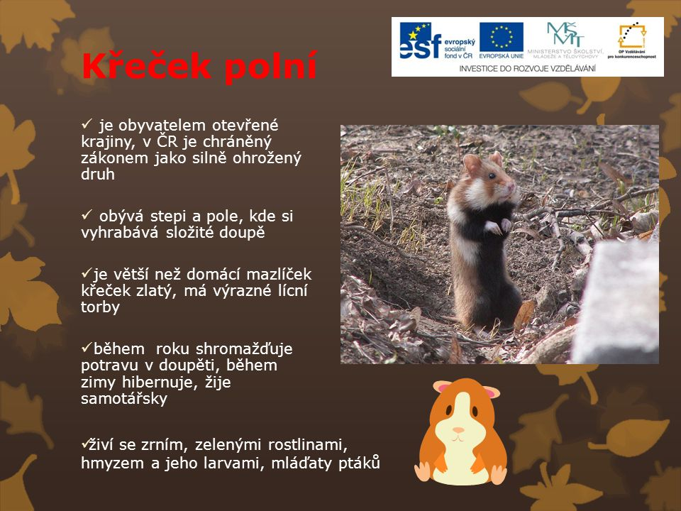 Křeček polní je obyvatelem otevřené krajiny, v ČR je chráněný zákonem jako silně ohrožený druh.