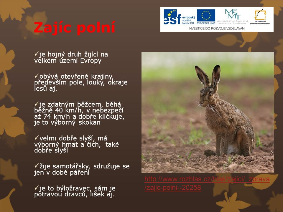 Zajíc polní je hojný druh žijící na velkém území Evropy. obývá otevřené krajiny, především pole, louky, okraje lesů aj.