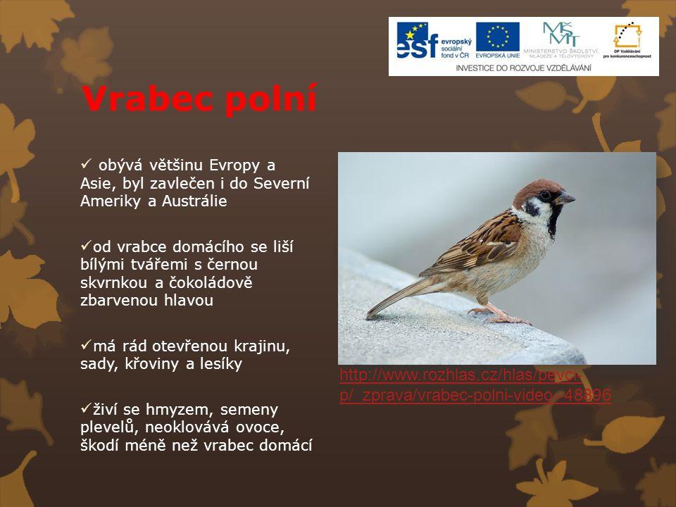 Vrabec polní obývá většinu Evropy a Asie, byl zavlečen i do Severní Ameriky a Austrálie.