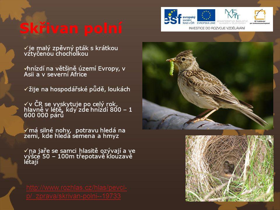 Skřivan polní je malý zpěvný pták s krátkou vztyčenou chocholkou. hnízdí na většině území Evropy, v Asii a v severní Africe.