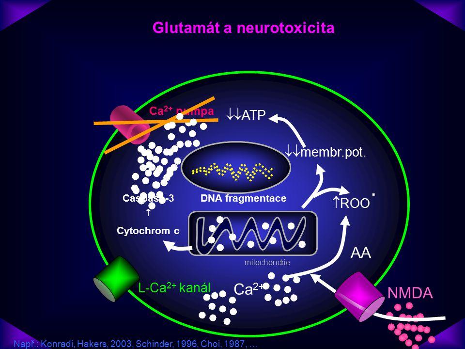 Glutamát a neurotoxicita