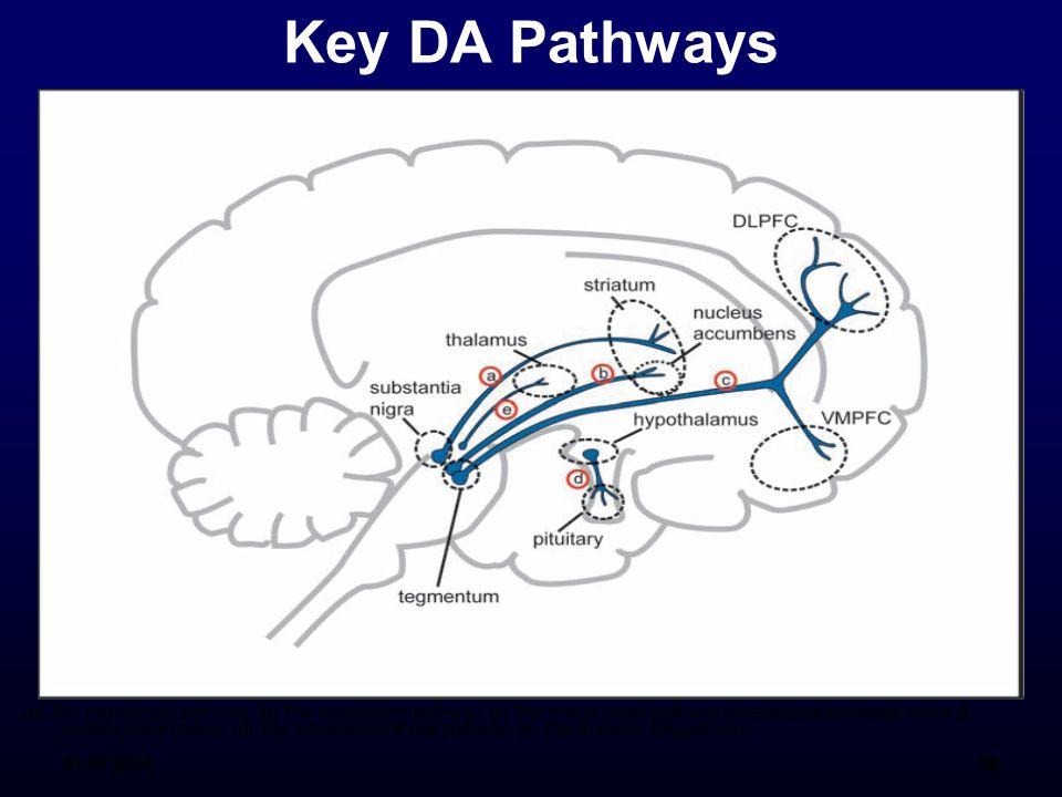 Key DA Pathways