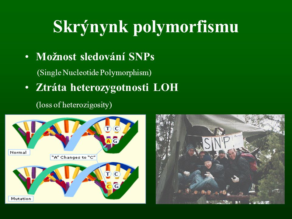 Skrýnynk polymorfismu