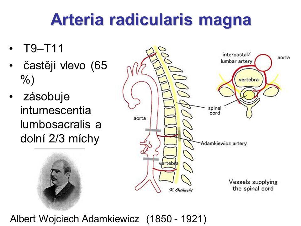 Arteria radicularis magna