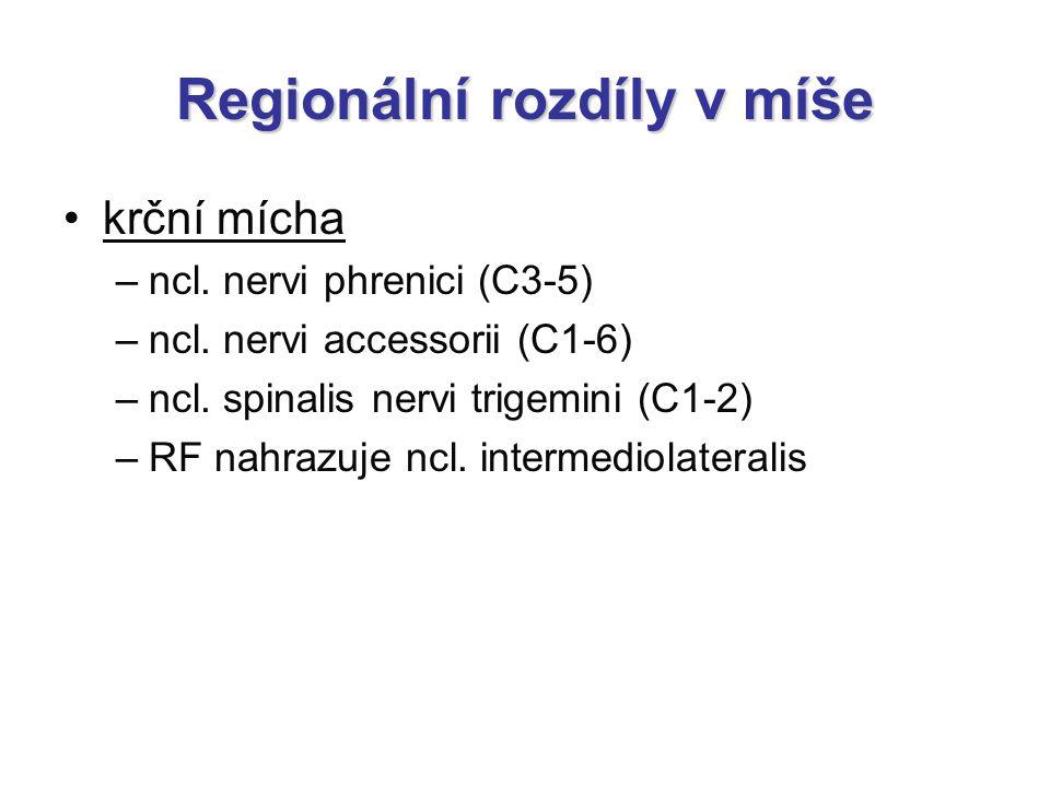 Regionální rozdíly v míše