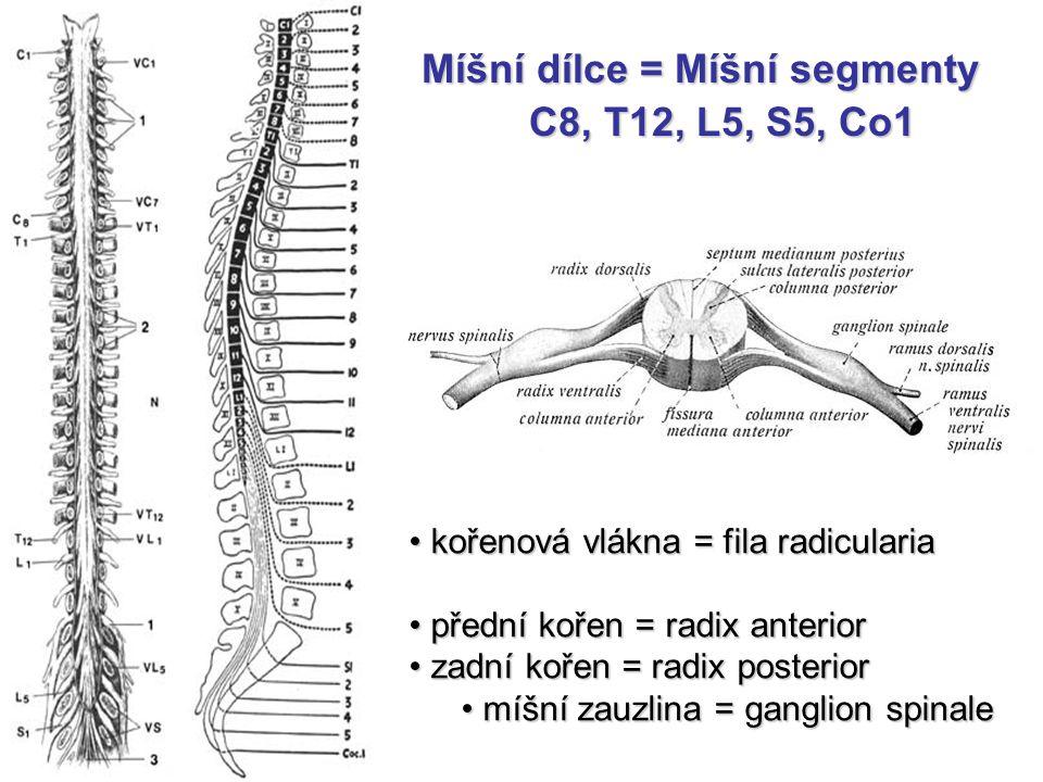 Míšní dílce = Míšní segmenty