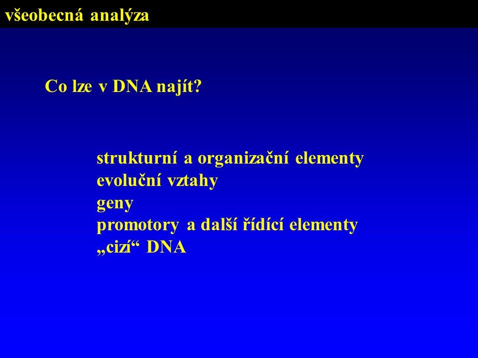 všeobecná analýza Co lze v DNA najít strukturní a organizační elementy. evoluční vztahy. geny. promotory a další řídící elementy.