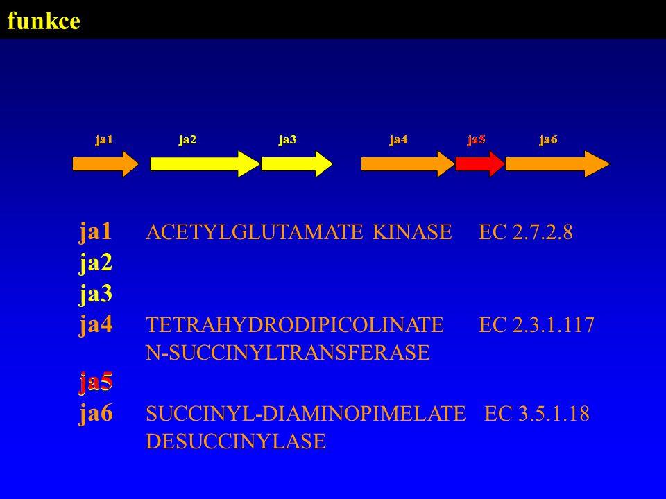 ja1 ACETYLGLUTAMATE KINASE EC 2.7.2.8 ja2 ja3