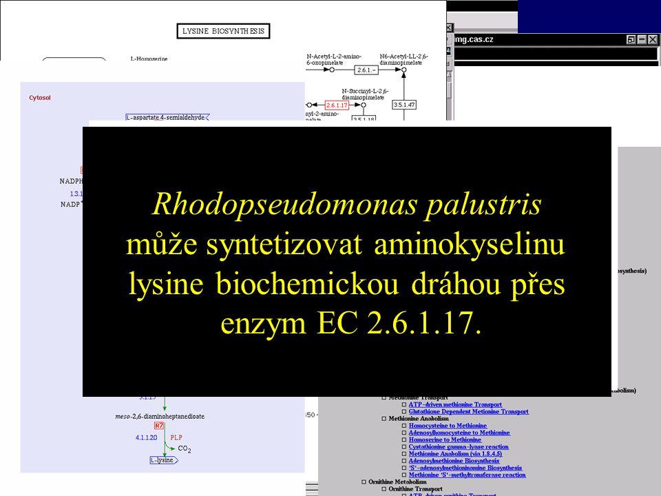 Bioinformatika Rhodopseudomonas palustris
