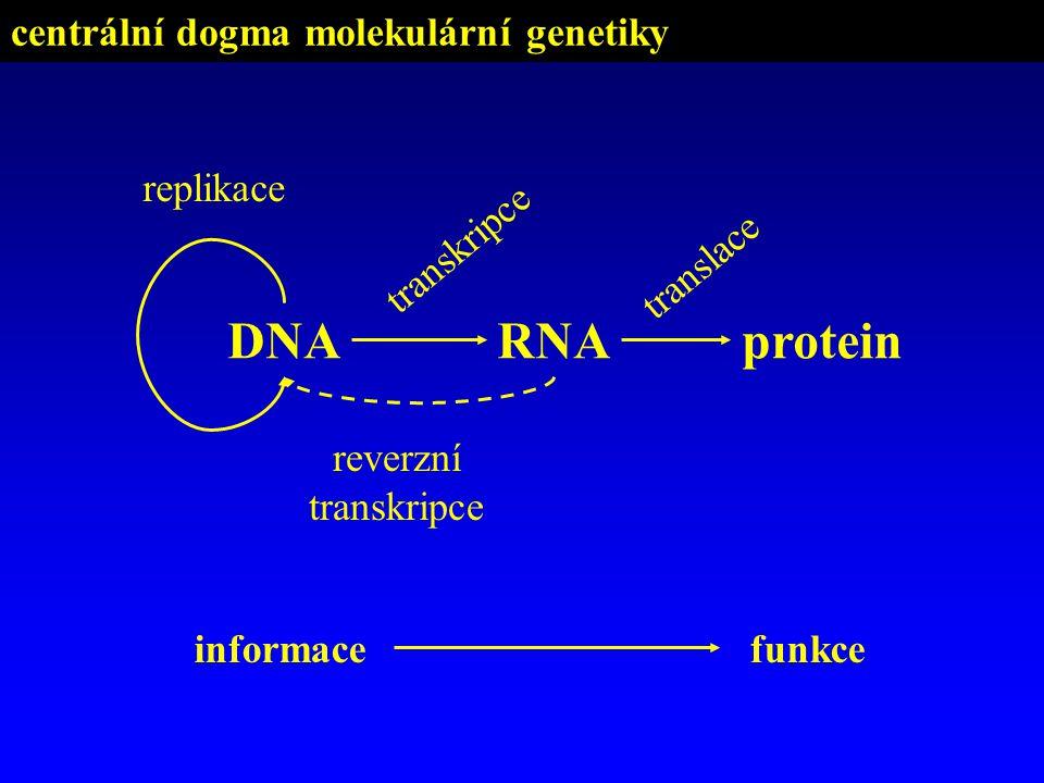 centrální dogma molekulární genetiky