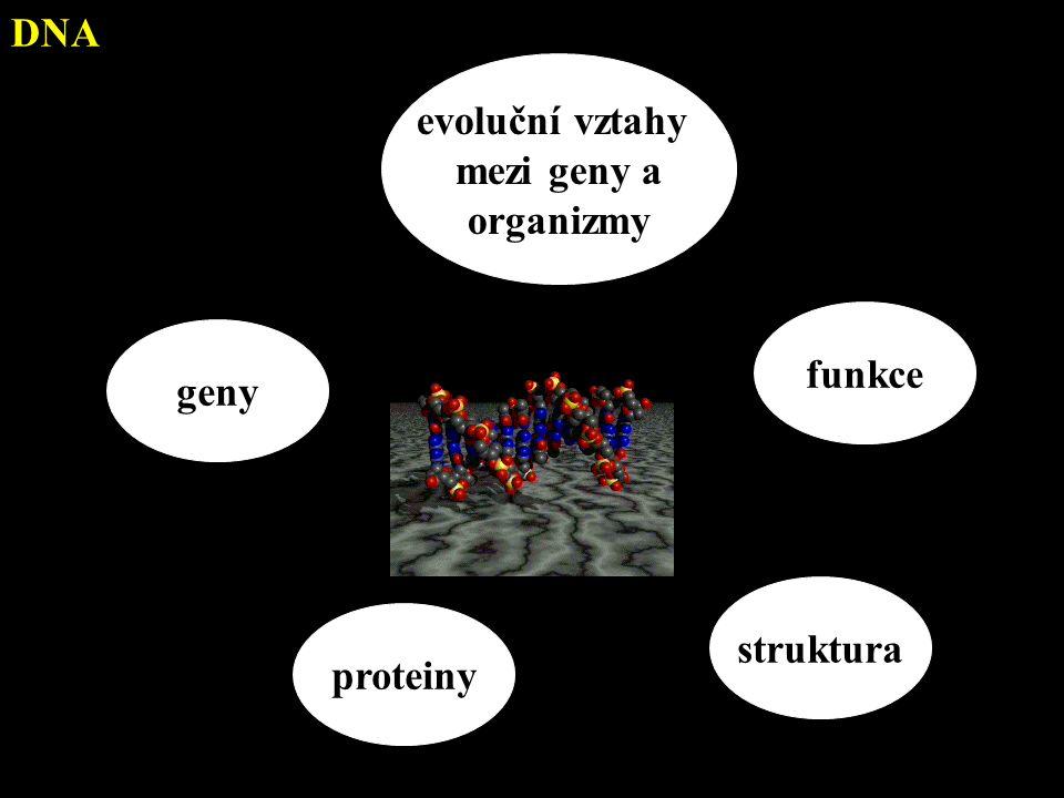 DNA evoluční vztahy mezi geny a organizmy funkce geny struktura proteiny