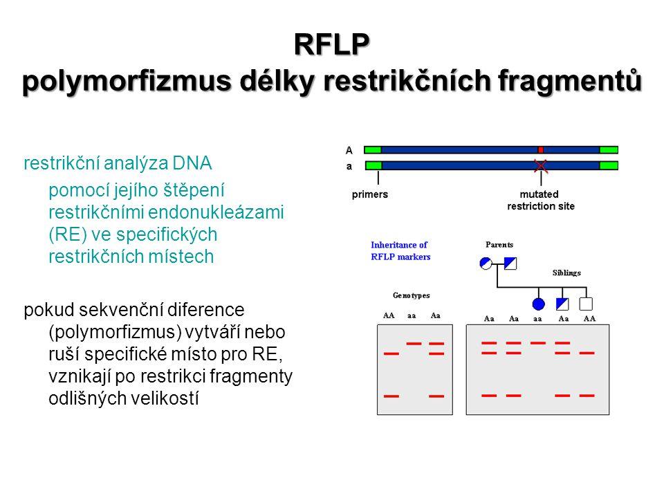 RFLP polymorfizmus délky restrikčních fragmentů
