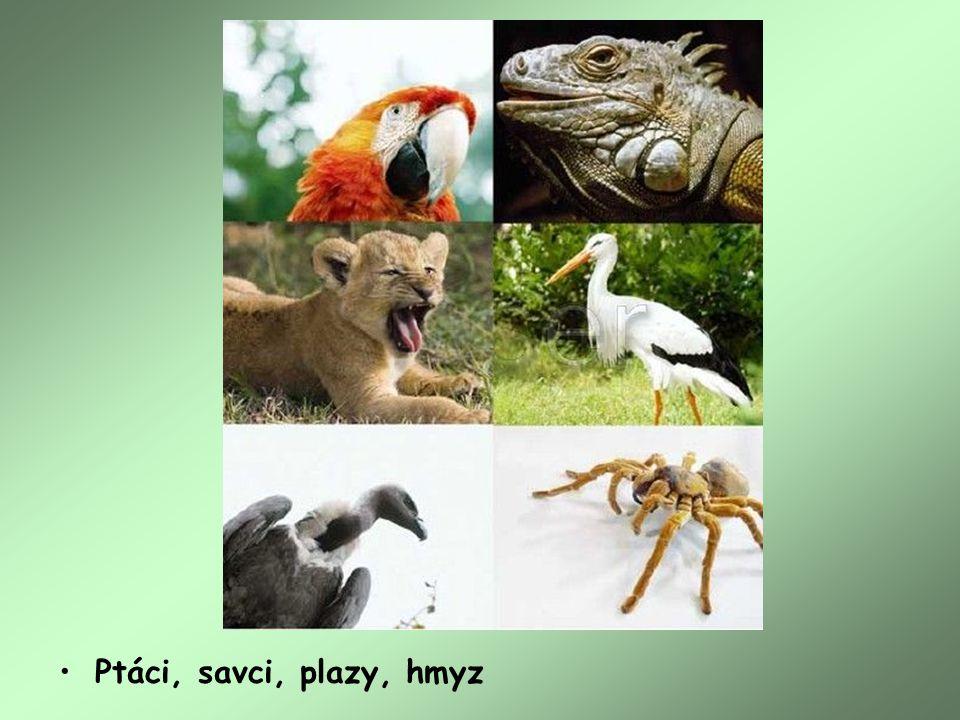 Ptáci, savci, plazy, hmyz