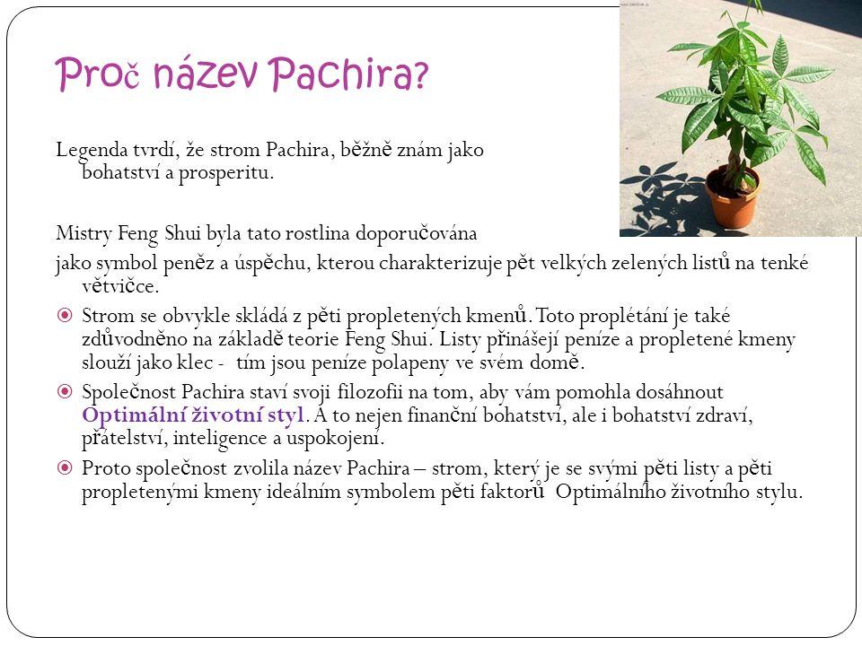 Proč název Pachira Legenda tvrdí, že strom Pachira, běžně znám jako strom peněz, přináší bohatství a prosperitu.
