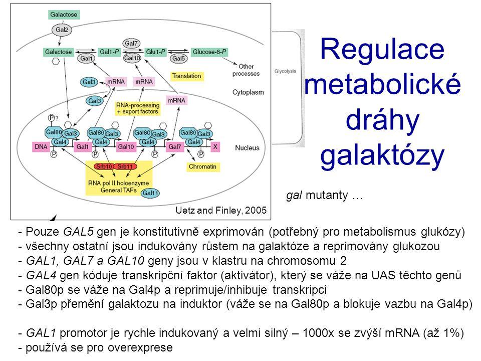 Regulace metabolické dráhy galaktózy
