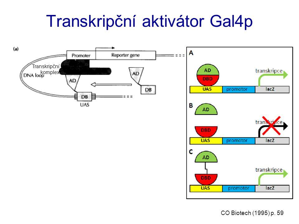 Transkripční aktivátor Gal4p