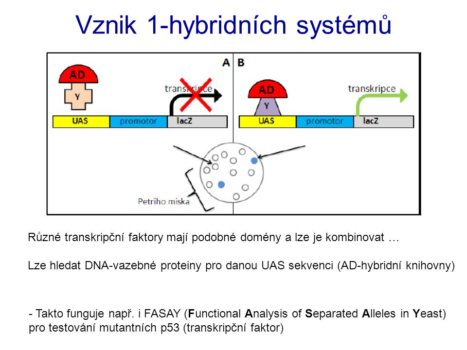 Vznik 1-hybridních systémů