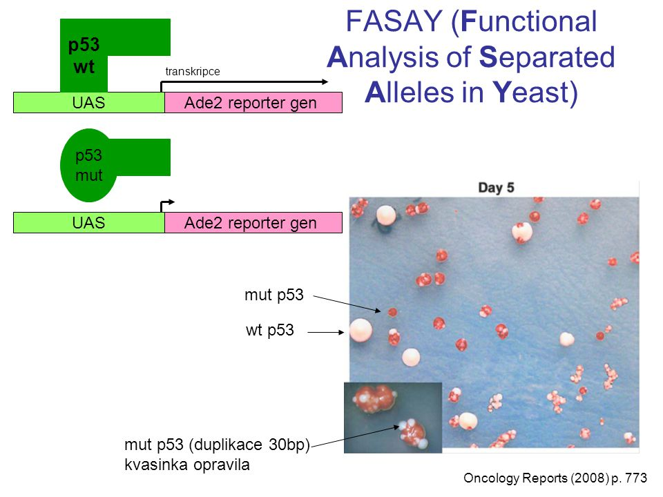 FASAY (Functional Analysis of Separated Alleles in Yeast)