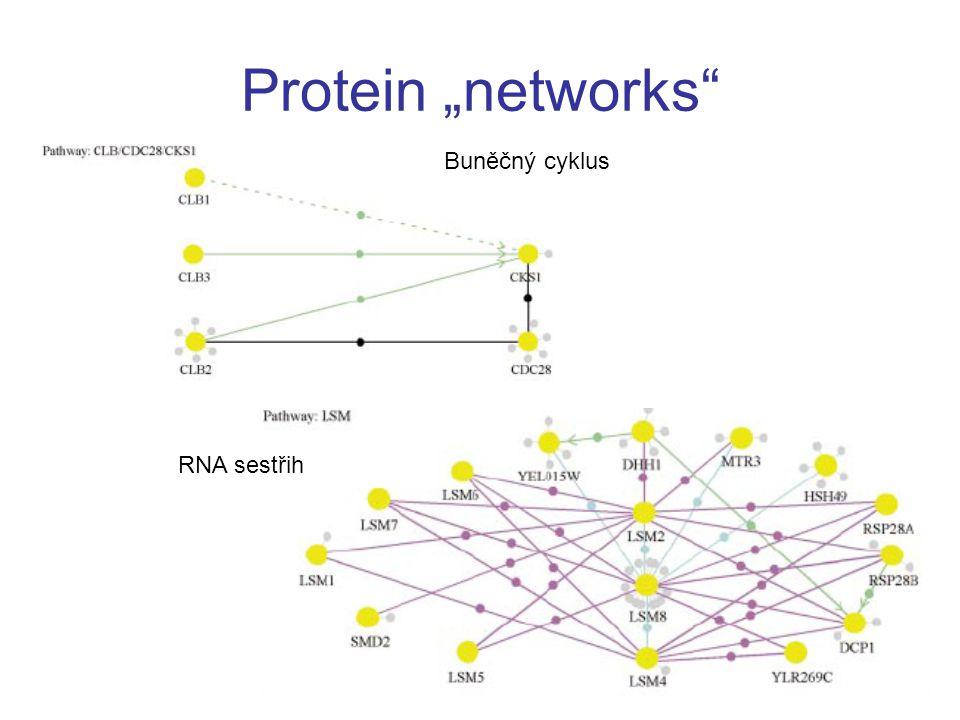 """Protein """"networks Buněčný cyklus RNA sestřih"""