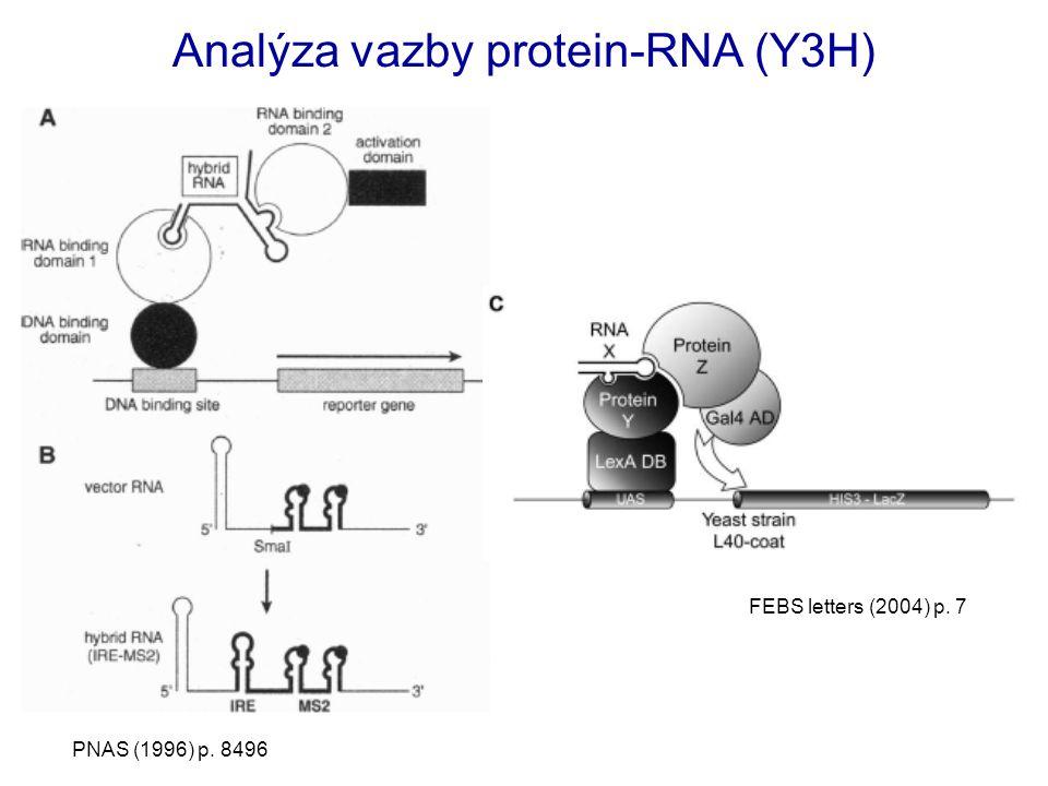 Analýza vazby protein-RNA (Y3H)