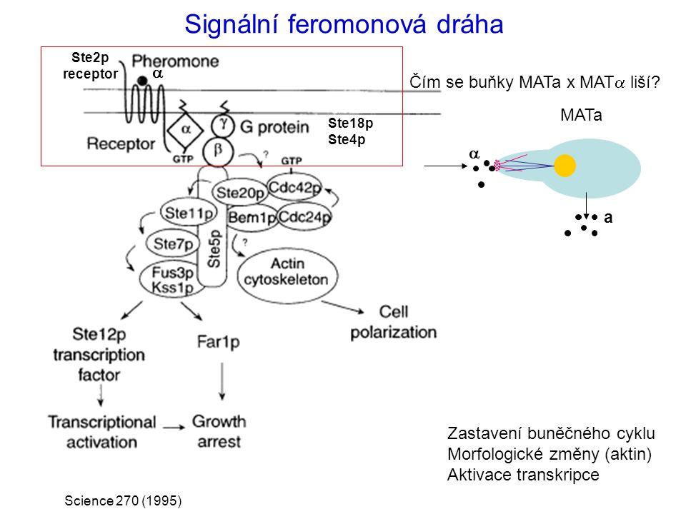 Signální feromonová dráha