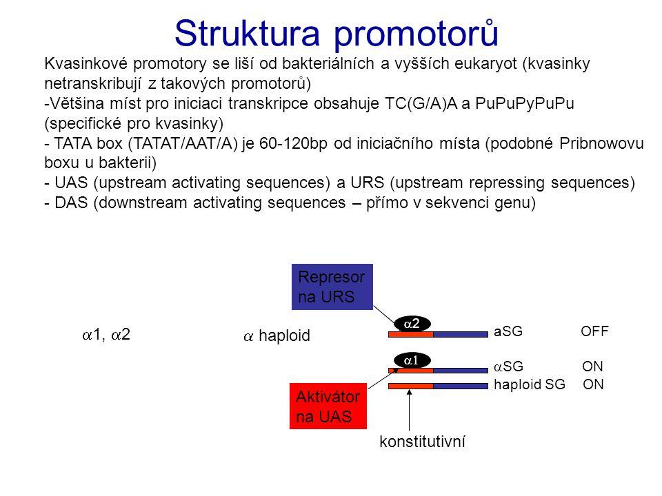 Struktura promotorů Kvasinkové promotory se liší od bakteriálních a vyšších eukaryot (kvasinky netranskribují z takových promotorů)