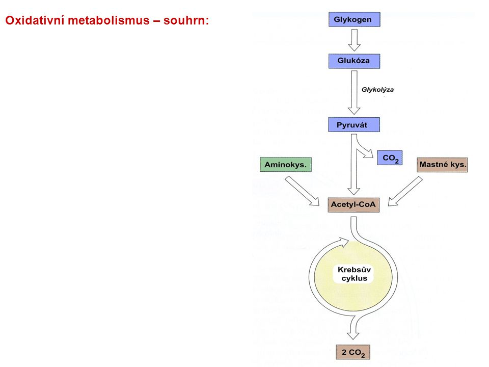 Oxidativní metabolismus – souhrn: