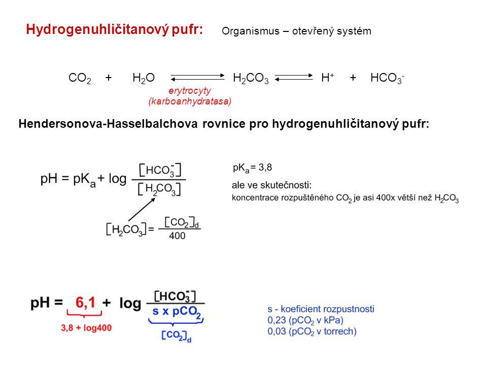 Hydrogenuhličitanový pufr: