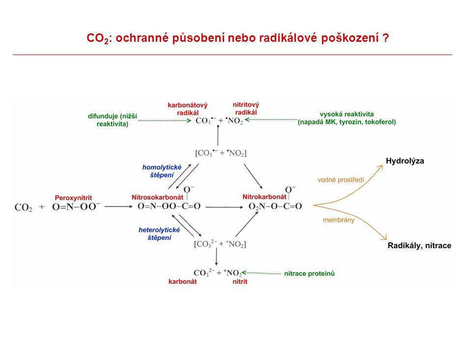 CO2: ochranné působení nebo radikálové poškození