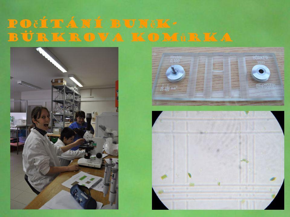 Počítání buněk-Bürkrova komůrka