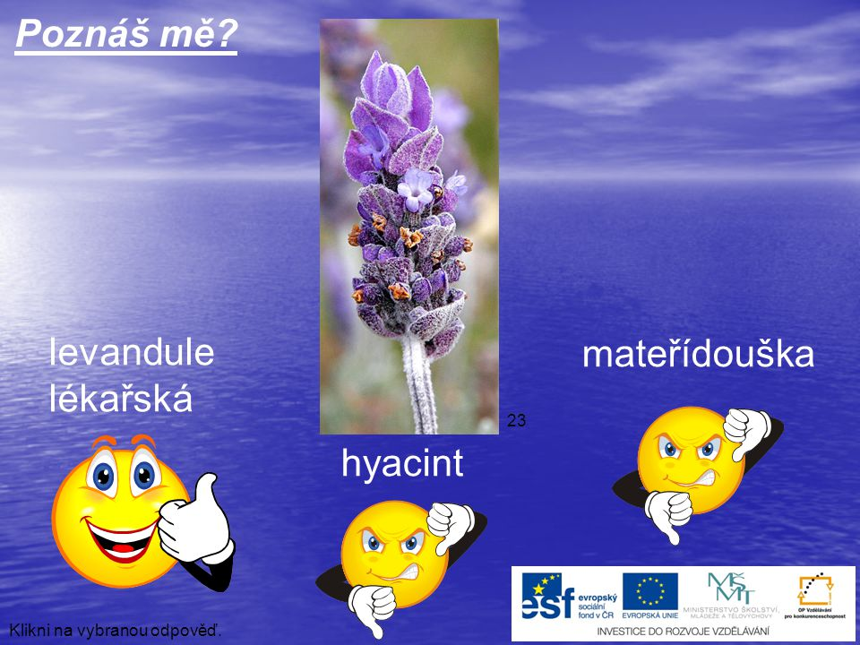 Poznáš mě levandule mateřídouška lékařská hyacint 23