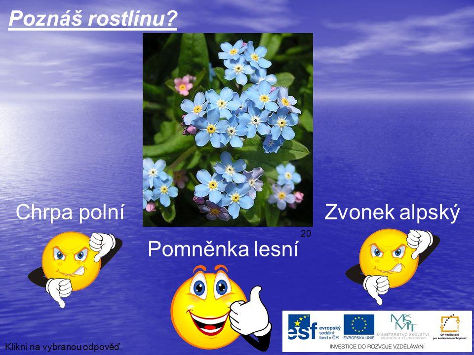 Poznáš rostlinu Chrpa polní Zvonek alpský Pomněnka lesní 20