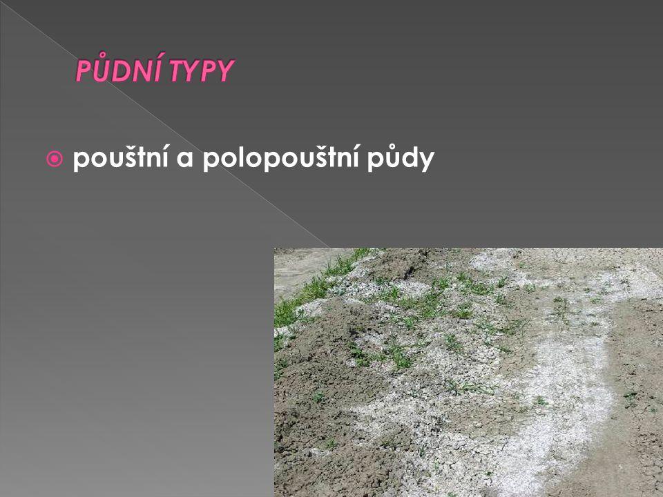 PŮDNÍ TYPY pouštní a polopouštní půdy
