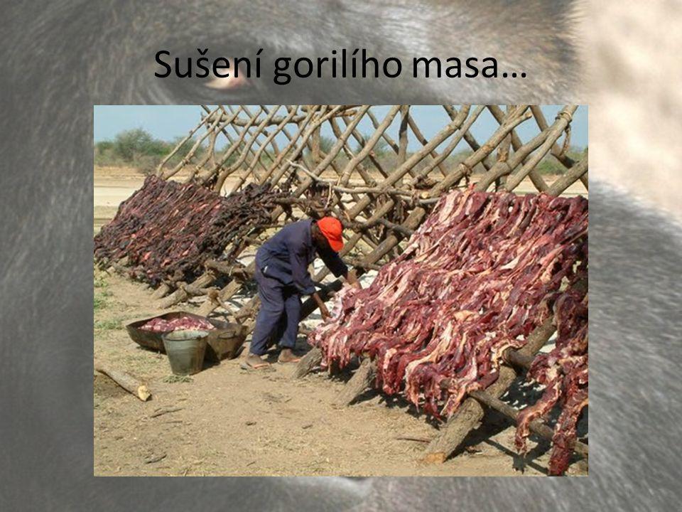 Sušení gorilího masa…