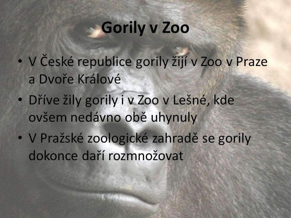 Gorily v Zoo V České republice gorily žijí v Zoo v Praze a Dvoře Králové. Dříve žily gorily i v Zoo v Lešné, kde ovšem nedávno obě uhynuly.