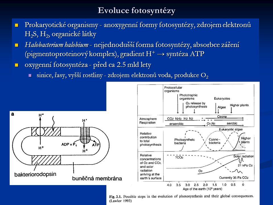 Evoluce fotosyntézy Prokaryotické organismy - anoxygenní formy fotosyntézy, zdrojem elektronů H2S, H2, organické látky.