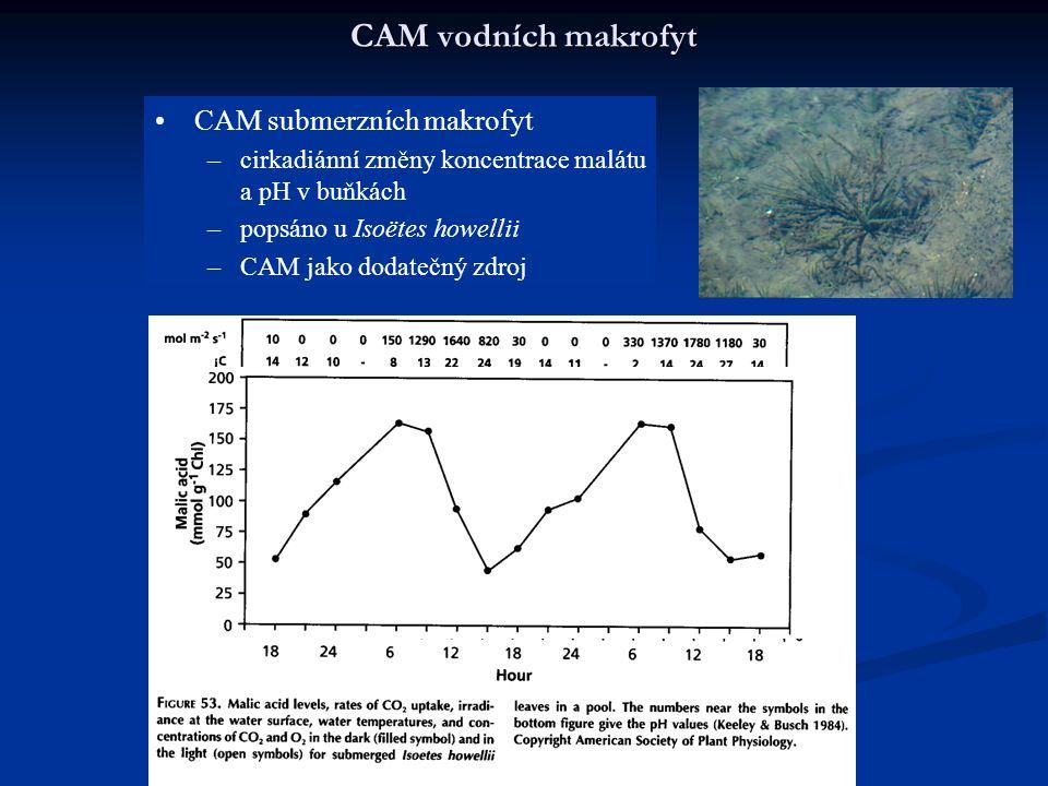 CAM vodních makrofyt CAM submerzních makrofyt